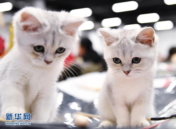 壁纸 动物 猫 猫咪 小猫 桌面 600_442