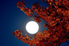 春城花月夜
