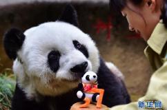 """寿星大熊猫""""巴斯"""":我37岁啦"""
