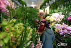 杭州:买盆鲜花过大年