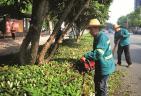 文明宜昌 绿化景观吹来新的文明之风
