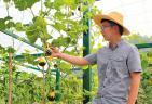 引进新奇瓜果 助力观光农业