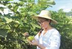 筛选优良品种 做强水果产业