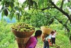 生态产业 助农增收